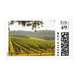 El viñedo y un valle con un bosque -