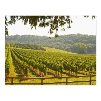 El viñedo y un valle con un bosque - tarjeta postal