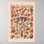 El vintage da fruto el poster 1920