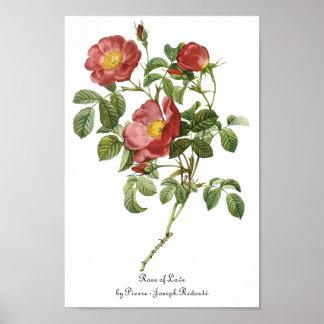 El vintage florece el rosa rojo floral del amor po impresiones