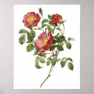 El vintage florece el rosa rojo floral del amor po poster