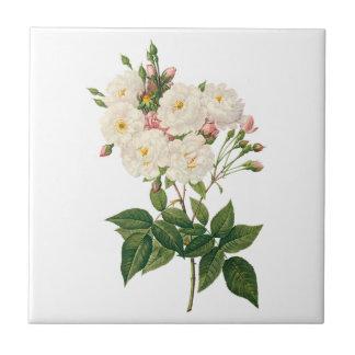 El vintage florece floral se ruboriza Redoute Azulejo Cuadrado Pequeño