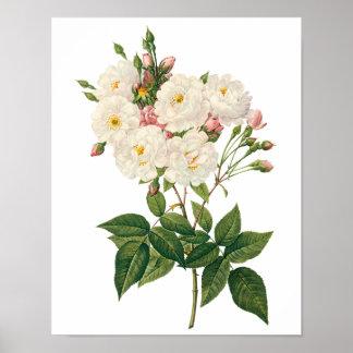 El vintage florece floral se ruboriza Redoute subi Poster