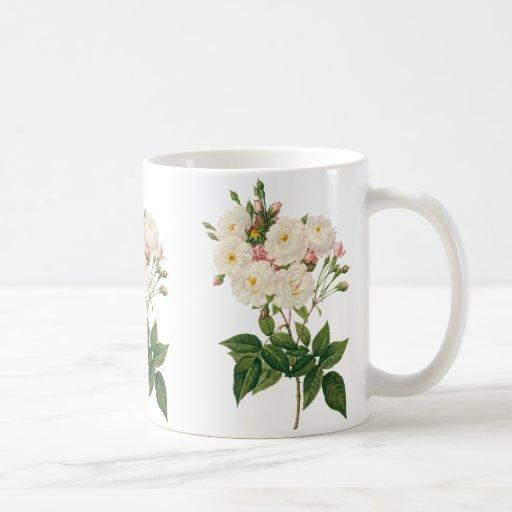 El vintage florece floral se ruboriza Redoute Taza