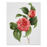 El vintage florece las camelias rosadas rojas flor impresiones