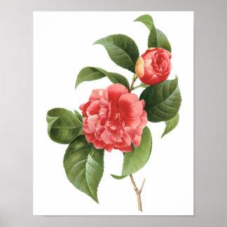 El vintage florece las camelias rosadas rojas póster
