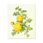 El vintage florece rosas florales, amarillos por R Lona Estirada Galerías
