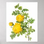 El vintage florece rosas florales, amarillos por R Poster