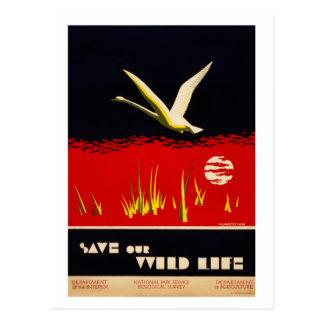 El vintage restauró reserva nuestro cisne de postales