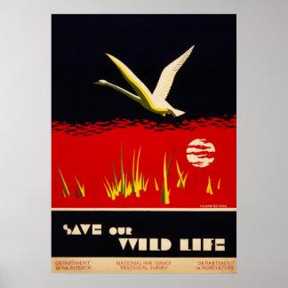 El vintage restauró reserva nuestro cisne de tromp poster
