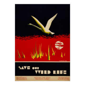 El vintage restauró reserva nuestro cisne de tromp póster