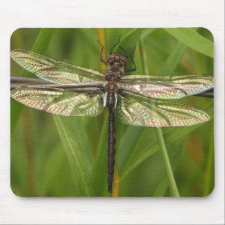El vitral se va volando la libélula Mousepad