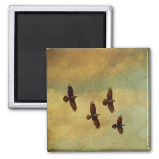 El volar de cuatro cuervos imán de nevera