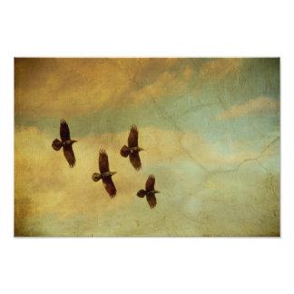El volar de cuatro cuervos arte fotografico