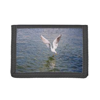 El volar de la gaviota por encima de la superficie
