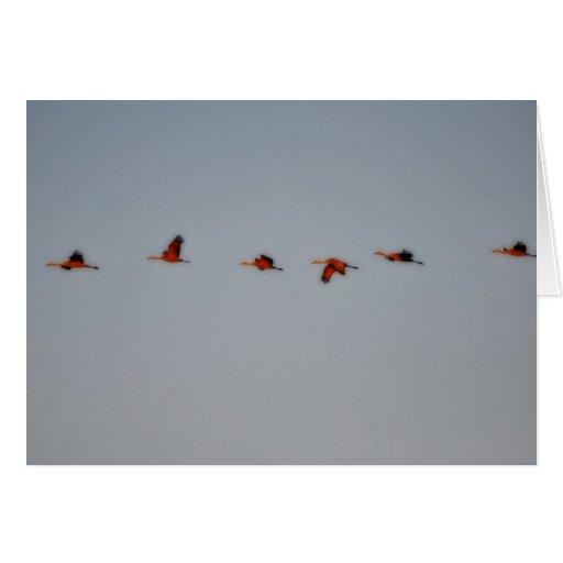 El vuelo Cranes la tarjeta de felicitación
