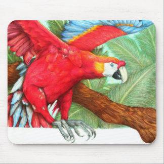 El vuelo del Macaw por la torre de perforación Rat