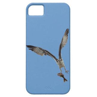 El vuelo Osprey y pesca fotografía de la fauna 2 iPhone 5 Case-Mate Cobertura