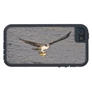 El vuelo Osprey y pesca fotografía de la fauna 4 iPhone 5 Cárcasas