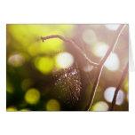 El Web de araña en la luz del sol Tarjeta