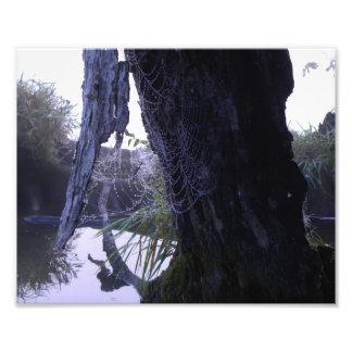 El Web de la naturaleza Fotos