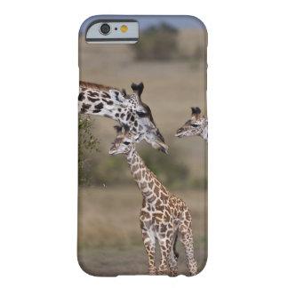 El wie de la jirafa de Maasai jirafa