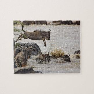 El Wildebeest que salta en el río de Mara durante Rompecabeza Con Fotos