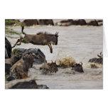 El Wildebeest que salta en el río de Mara durante Felicitación