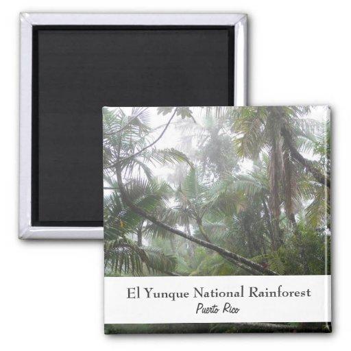 El Yunque, Puerto Rico 2 Inch Square Magnet