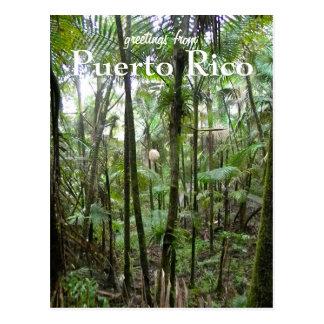 EL Yunque, Puerto Rico Postales