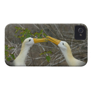Elaborate courtship dance of Waved Albatros, iPhone 4 Case