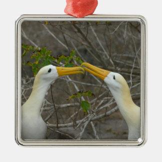 Elaborate courtship dance of Waved Albatros, Metal Ornament
