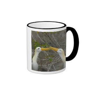 Elaborate courtship dance of Waved Albatros, Ringer Mug