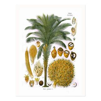 Elaeis guineensis (oil palm) postcards