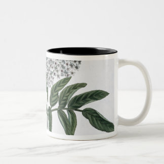 Elder, fig. 13 from 'The Young Landsman', publishe Two-Tone Coffee Mug