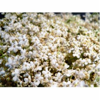 Elder Flowers Little Photo Cutouts