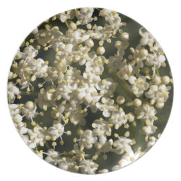 Elderberry flowers (Sambucus nigra) Dinner Plate