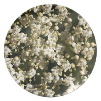 Elderberry flowers (Sambucus nigra) Party Plate