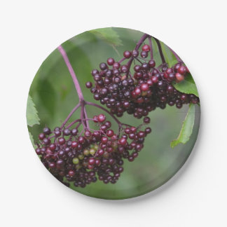 Elderberry Paper Plate