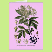 Elderberry Sambucus greeting card