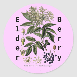 Elderberry Sambucus sticker