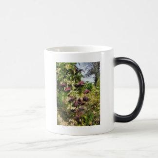 Elderflower Magic Mug