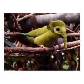 Elebird postcard