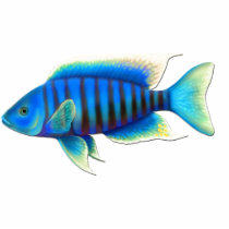 Electric Blue African Peacock Cichlid Fish Pin Statuette