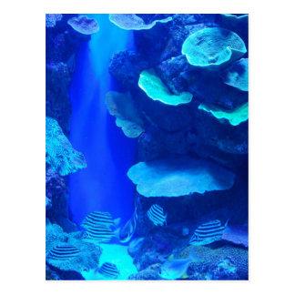 Electric Blue Fish Postcard