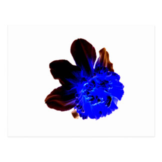 Electric Blue Glow Daffodil Postcard