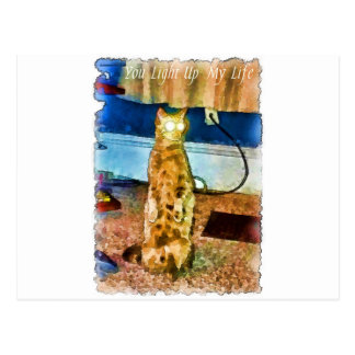 Electric cat card.jpg postcard