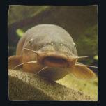 "Electric catfish bandana<br><div class=""desc"">Malapterurus electricus in aquarium. Photography.</div>"