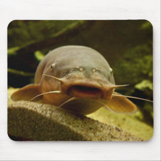 Electric catfish mouse pad