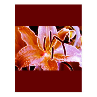 Electric Lilly Postcard